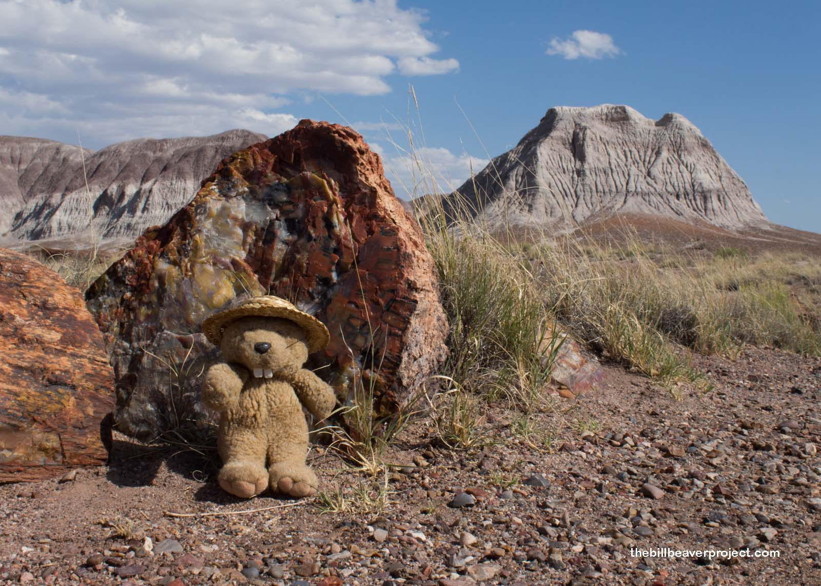 petrified forest natl pk big and beautiful singles Match & flirt with singles in forest lake  petrified forest natl pk black women dating site  vilhelmina big and beautiful singles.